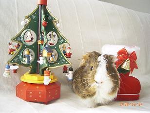 ★゚+。Merry Xmas。+゚★3