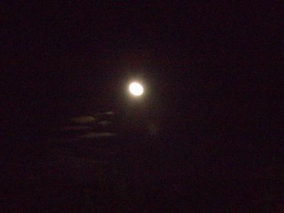 うどん月見2
