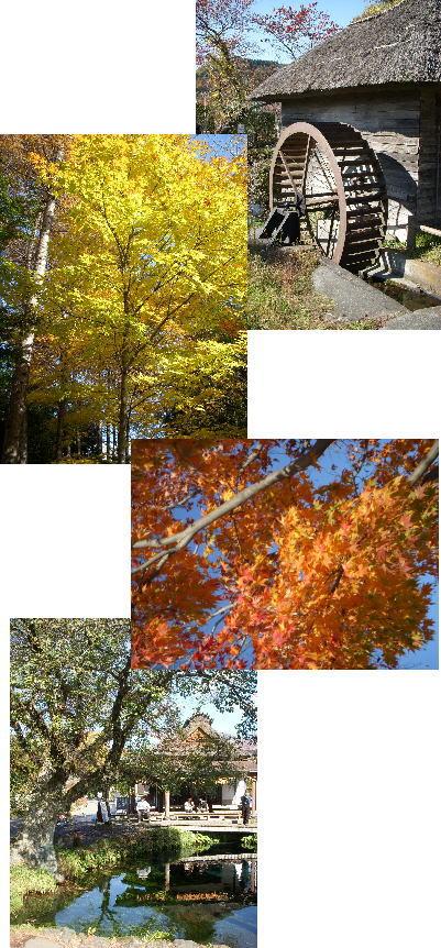 2008-11-7-2.jpg