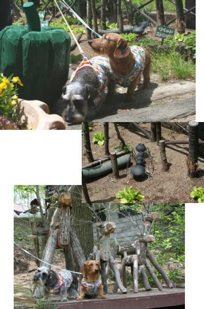 2009-5-15-103.jpg