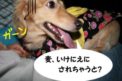 2009.7.18①