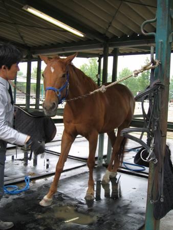 20070502乗馬
