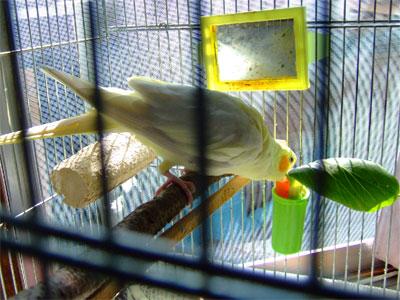 piro200900815-1.jpg