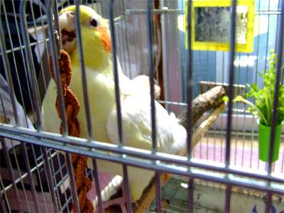 piro20090725-1.jpg