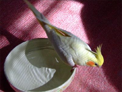 piro20090730-4.jpg