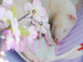 4月カレンダー桜