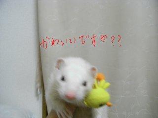 RIMG0033_20090724204101.jpg