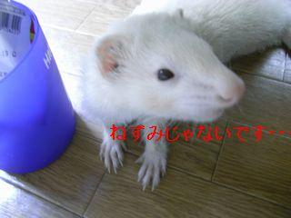 RIMG0113.jpg