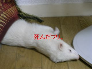 RIMG0141.jpg