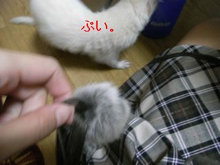 RIMG0148.jpg