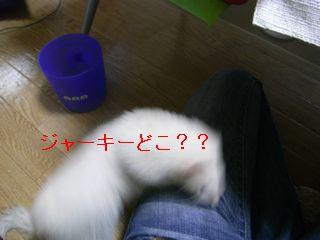 RIMG0159.jpg