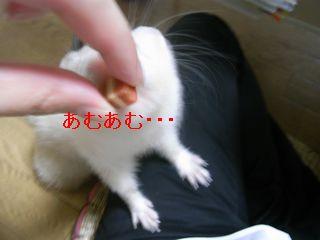RIMG0177.jpg