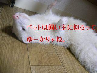 RIMG0185.jpg