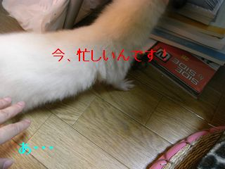 RIMG0233.jpg