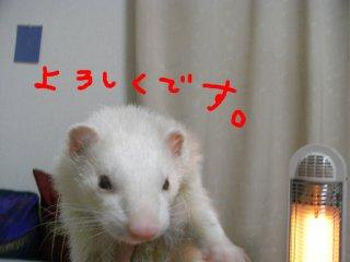 RIMG0320.jpg