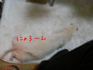 RIMG0369.jpg