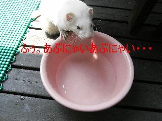 RIMG0546.jpg