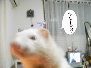 RIMG0591.jpg