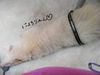 RIMG0595_20090315135004.jpg