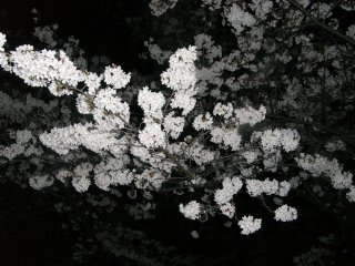 RIMG0705_20090404013652.jpg