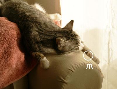 ソファの肘掛の上のナナ1