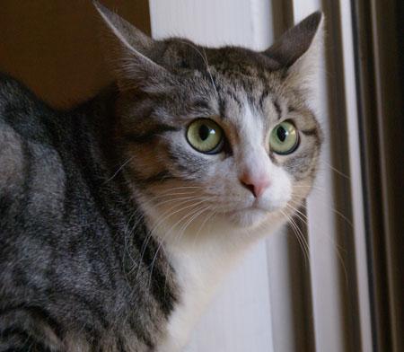 保護色猫さん5
