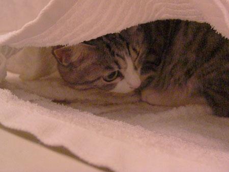 バスルームは隠れ家?5