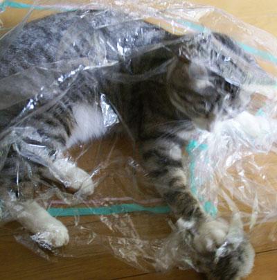 今度は透明なビニール袋4