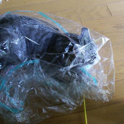 今度は透明なビニール袋8
