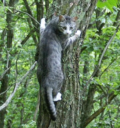 一緒に木登りad