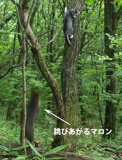 一緒に木登り2