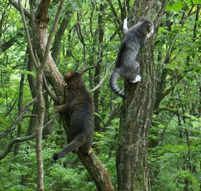 一緒に木登り3