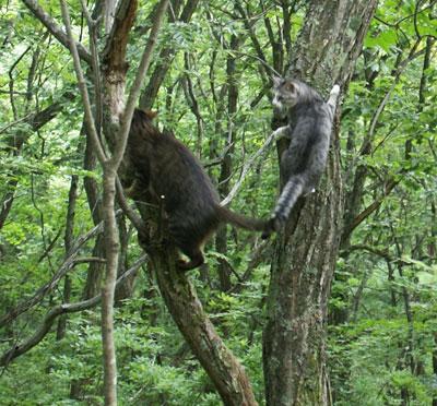 一緒に木登り4