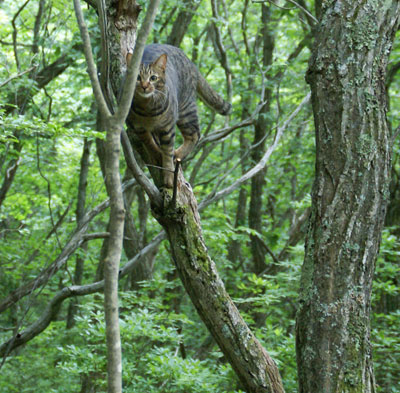 一緒に木登り11
