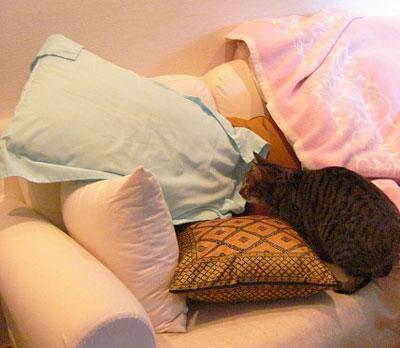 お客様用寝具とマロン1