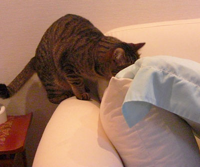 お客様用寝具とマロン3
