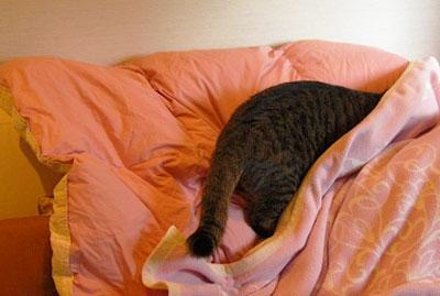 お客様用寝具とマロン6