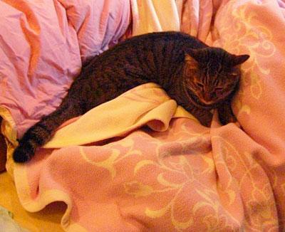 お客様用寝具とマロン7