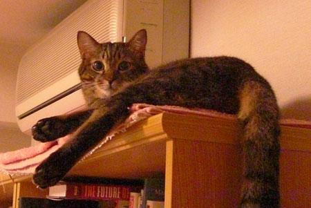 本棚の上のマロン5