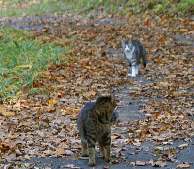 秋のお散歩6
