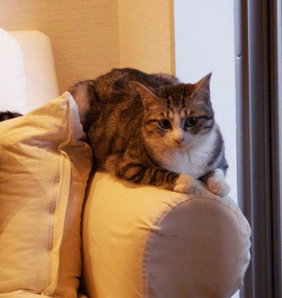 ソファが好きなんだけど・・・1