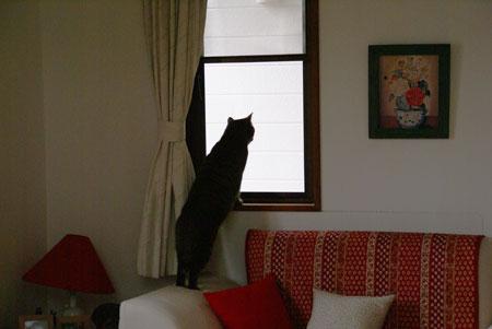 窓辺のマロン1