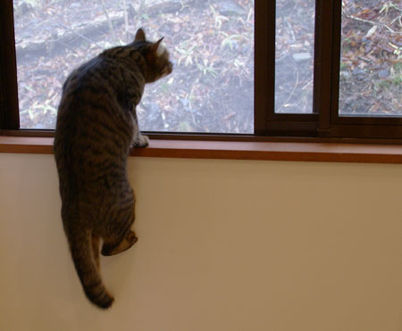 窓辺のマロン3