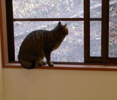 窓辺のマロン4