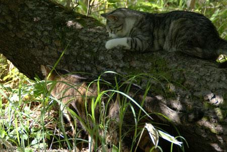 木陰でお休み4