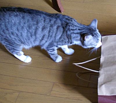 ナナちゃん、紙袋よ2