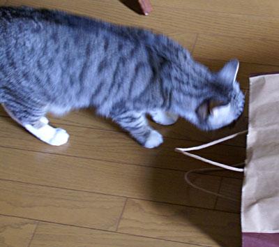 ナナちゃん、紙袋よ3