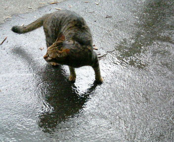 雨の思い出4