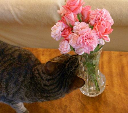 ピンクのお花4
