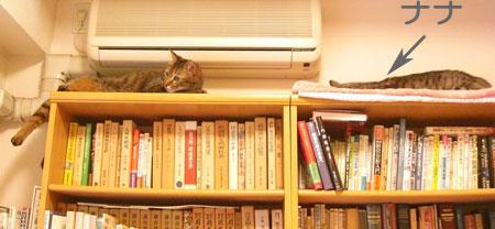 本棚の上で1